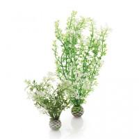 46067 Растения комплект biOrb Aquatic winter flower водно зимно цвете